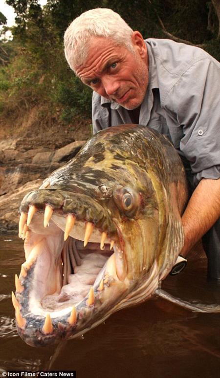 морские чудовища видео рыбалка