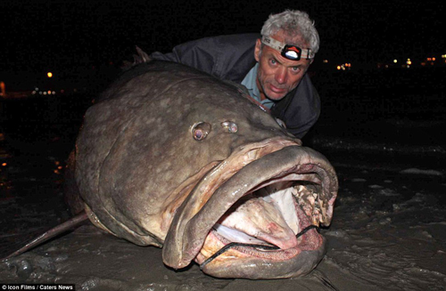 документальные фильмы про ловлю тунца